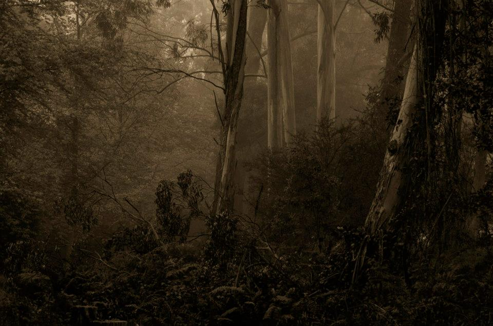 Philip Johnson Photography