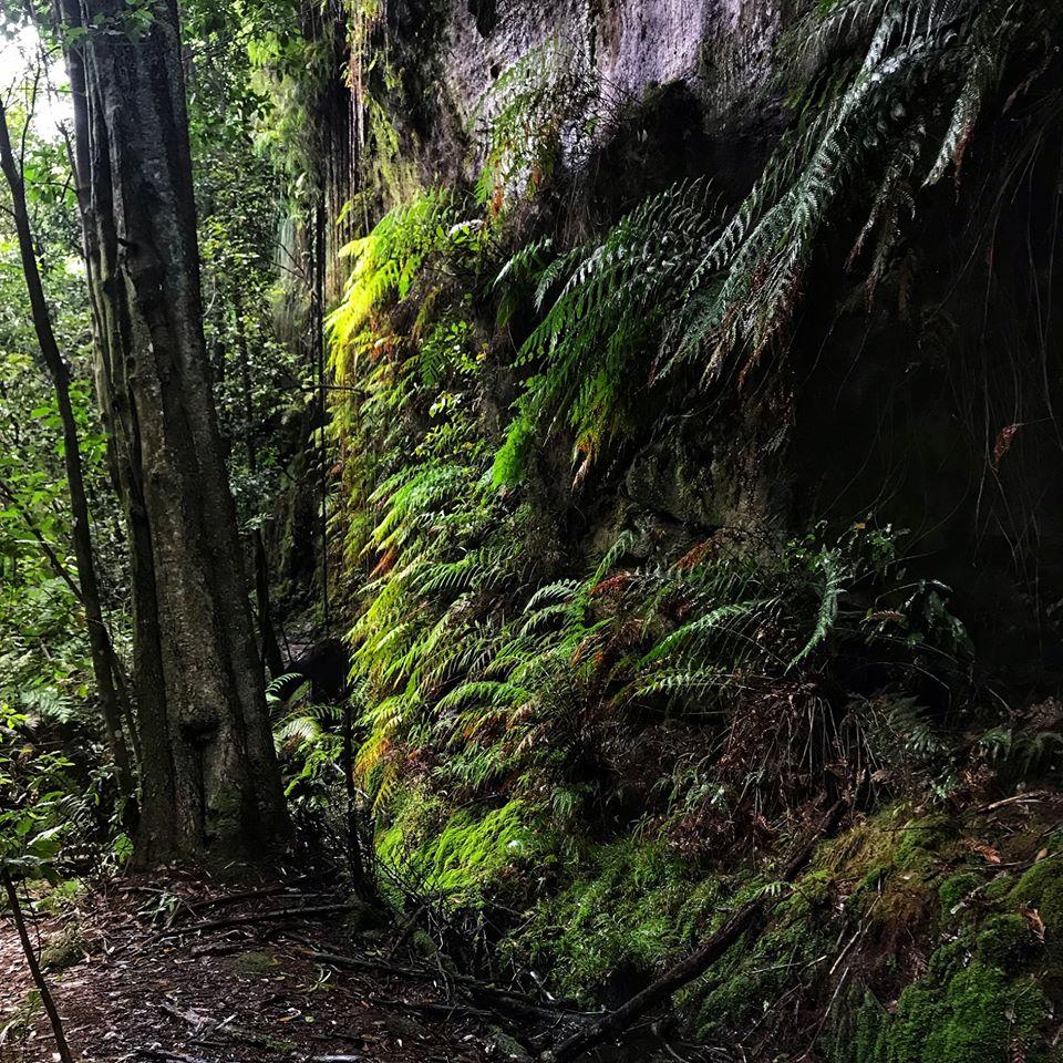 South Lawson Waterfall Loop Walk