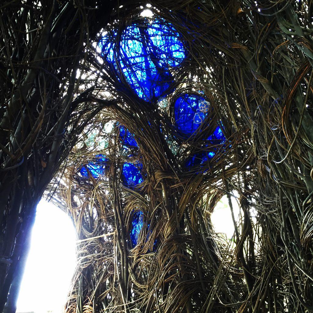 Ask Roz Blue Mountains Botanic Garden