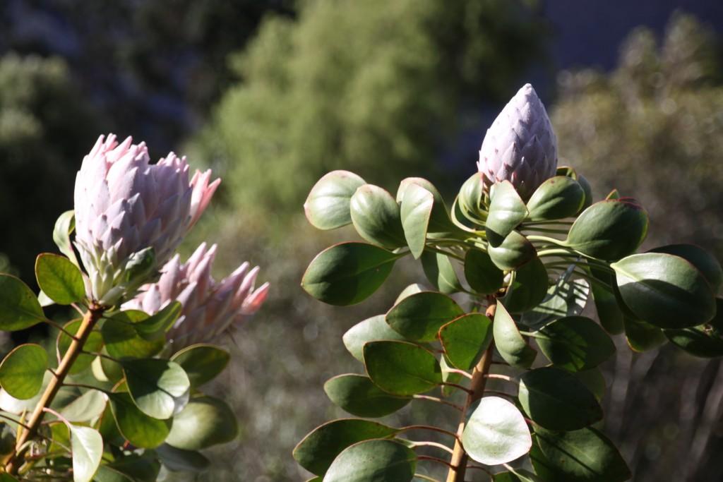 Blue Mountains Botanic Gardens - Ask Roz