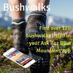 Ask Roz Blue Mountains Bushwalks