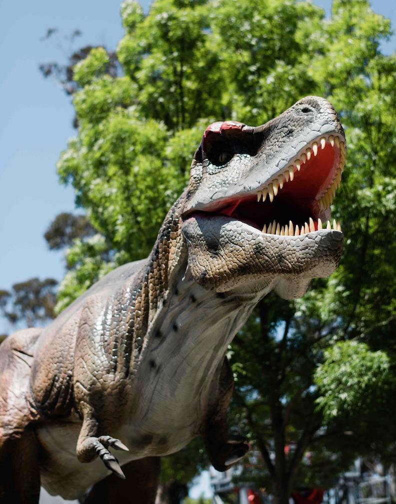 Dinosaur Valley T-Rex