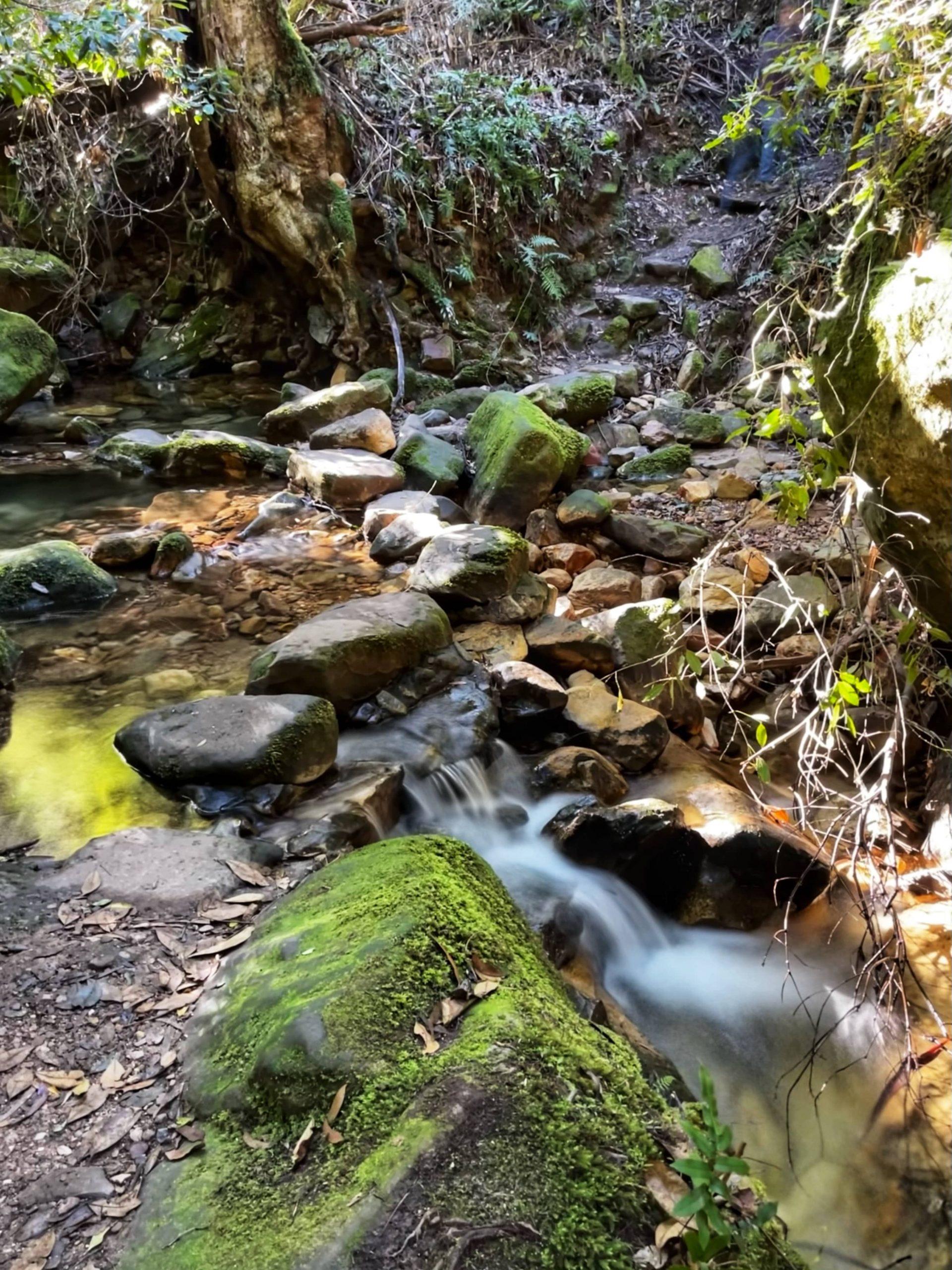 Coachwood Glen, Megalong Valley