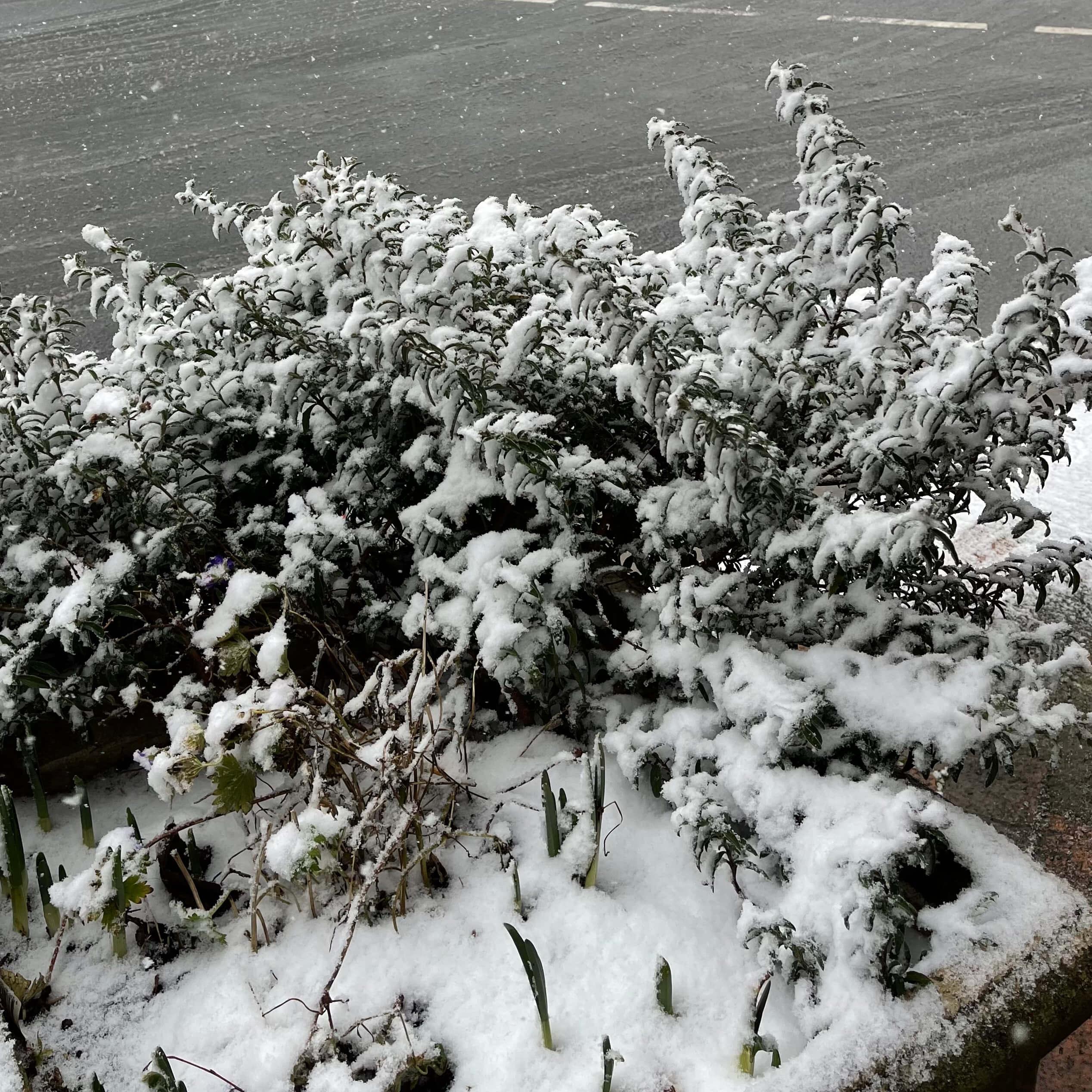 Blue Mountains Snowfall 10th June 2021
