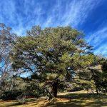 Upper picnic area Leura Cascades