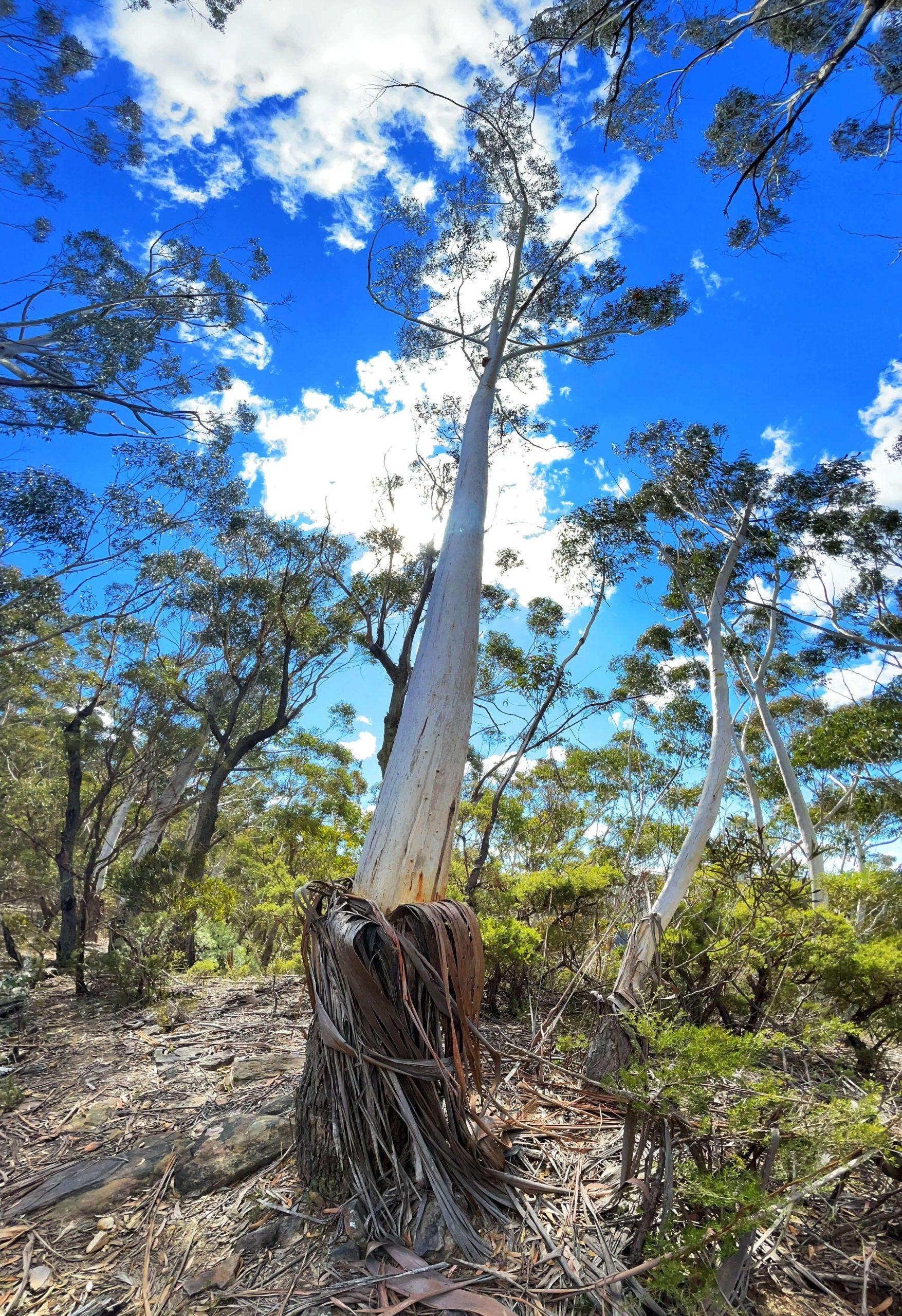Ngula Bulgarabang Regional Park - Radiata Plateau